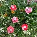 5 db Piros Árnyalatú Kerámia Virág (tp.26), Dekoráció, Esküvő, Gyűrűpárna, Esküvői dekoráció,  Szedj egy  csokrot  a virágos kertemből! A termékmegnevezés melletti kódot és darabszámot ke..., Meska