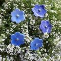 5db  Kék  Mázas Kerámia Virág (tp.23), Esküvő, Otthon, lakberendezés, Dekoráció, Esküvői dekoráció, Kerámia, Virágkötés, Szedj egy csokrot a virágos kertemből!Állítsd össze a saját csokrod! Tedd kosárba valamelyik összeá..., Meska