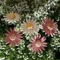 """5 db Hatalmas Margaréta"""" Kerámia Virág (tp.12), Dekoráció, Otthon, lakberendezés, Kaspó, virágtartó, váza, korsó, cserép, Kerti dísz, Kerámia, Virágkötés,  Szedj egy  csokrot a virágos kertemből!Állítsd össze saját csokrod! Tedd kosára valamelyik összeál..., Meska"""