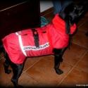 Rosie\'s kutya kabát, kutyaruha, Állatfelszerelések, Készüljünk a télre! Nem lehet elég korán kezdni.  Vízlepergetős meleg kutyakabát, Wellszoft..., Meska