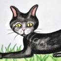 Fekete macska - rajz, Otthon, lakberendezés, Dekoráció, Képzőművészet, Kép, Fotó, grafika, rajz, illusztráció, Fekete cica a fűben. Saját ötletek alapján rajzoltam akvarellceruzával akvarellpapírra. Kapcsos kép..., Meska