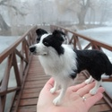Kutya hasonmás - egyedi tűnemez border collie, juhászkutya, Képzőművészet, Dekoráció, Szobor, Dísz, Nemezelés, Egy hasonmás kutya minden gazdi számára tökéletes meglepetés. Fénykép alapján dolgozom, egyedi megr..., Meska