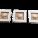 Tengeri stílusú kagylós képkeret-szett dekoráció 3db: Fésűkagyló, Otthon & Lakás, Dekoráció, Falra akasztható dekor, Festett tárgyak, Nagyon trendi az idei nyárra ez a 3db-os szett.  Ne félj, csakis elhullott kagylókkal készítem a tu..., Meska