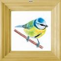 Kék cinege/cinke - Mini-kép színes fa képkerettel, Otthon & Lakás, Dekoráció, Kép & Falikép, Fotó, grafika, rajz, illusztráció, Kék cinegét/cinkét ábrázoló mini-kép: 9 színből választható színes fa díszképkerettel, az eredeti (..., Meska