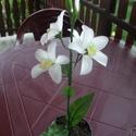 Harisnya virág., Dekoráció, Mindenmás, Egy száron  négy fehér virág.Kis cserépbe ültetve. Magassága cseréppel együtt 42 cm. , Meska