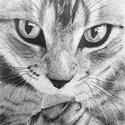 Cica, Képzőművészet, Dekoráció, Kép, Grafika, 23*30 cm-es kartonra, grafittal rajzolt cica. Paszpartu és keret nélkül küldöm, gondosan csomagolva...., Meska