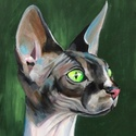 Sphynx - akrilfestmény, Képzőművészet, Festmény, Akril, 43 x 28,5 centis akrilfestmény vásznon, keret nélkül. Nagyon karakteres külsejű ez a macskafajta, eg..., Meska