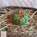 Tök dekoráció /KICSI/ zöld pöttyes, Otthon, lakberendezés, Varrás, Ezek a kézzel készített tökök nagyszerű kiegészítői lehetnek lakásunk őszi dekorációjának. Meglephe..., Meska