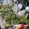 Esküvői köszönőkártya virágcserépbe, köszönőajándékhoz, ültetőkártya, Leszúrható köszönőkártya esküvőre. Mérete...