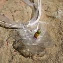 Átlátszó virág pet palackból készült újrahasznosított medál, Ékszer, Medál, Nyaklánc, Színtelen, átlátszó pet palackból aprólékos munkával készített virág formájú medál fehér organza sza..., Meska