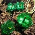 Zöld virág szett pet palackból készült újrahasznosított fülbevaló, gyűrű és medál, Ékszer, Medál, Nyaklánc, Zöld pet palackból aprólékos munkával készített virág formájú fülbevaló, gyűrű és medál.  A fülbeval..., Meska