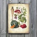 Konyhai falikép, Vintage zöldség, kép, Konyha dekoráció, botanikus, botanic, Zöldség festmény, Konyhai kellék, rajz, Dekoráció, Konyhafelszerelés, Férfiaknak, Konyhafőnök kellékei, A4/-es méretű Konyhai Vintage stílusú Botanikus Kép - Print lap- Nyomat  KERET NÉLKÜL   250 gsm matt..., Meska