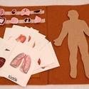 Az emberi test, Játék & Gyerek, Készségfejlesztő & Logikai játék, Varrás, Saját tervezésű emberi test mappa, amely segítségével a gyermek játékosan megismerkedhet a test bel..., Meska