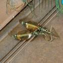 Vintage elegancia - romantikus üveggyöngy fülbevaló, régimódi fülbevaló, vintage fülbevaló, barna üveggyöngy  fülbevaló, Ékszer, Fülbevaló, Lüszteres barna üveggyöngy és antik bronz alkotta romantikus fülbevaló. Hossza akasztóval 5,5..., Meska