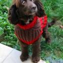 Csavart mintás kutyus ruha, Állatfelszerelések, Kötés, Megrendelésre készítettem ezt a rucit egy tündéri kutyusnak gyapjú műszál kevert fonalból.  Más szí..., Meska