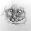 Miao!, Képzőművészet, Dekoráció, Otthon, lakberendezés, Grafika, Fotó, grafika, rajz, illusztráció, A cicák megunhatatlanok. Ceruzával készült a rajz, lefixálva, nem kenődik. Úgy emlékszem pont a dor..., Meska