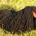 Fekete játékpuli (marionett), Baba-mama-gyerek, Játék, Gyerekszoba, Báb, Baba-és bábkészítés, Varrás, Játék kutyus. Kitűnő Ajándék!  Saját tervezésű,kivitelezésű darab! A képek magukért beszélnek. Van ..., Meska