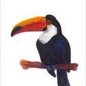 Tukán az ágon akvarell - A5 art print (akvarell festményem alapján), Képzőművészet, Illusztráció, Festmény, Akvarell, Tukán az ágon akvarell - A5 art print (akvarell festményem alapján)  Méret: 14,8 x21 cm (A5)  Tukán ..., Meska