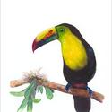 Tukán és zöld levelek akvarell - A5 art print (akvarell festményem alapján), Képzőművészet, Illusztráció, Festmény, Akvarell, Tukán és zöld levelek akvarell - A5 art print (akvarell festményem alapján)  Méret: 14,8 x21 cm (A5)..., Meska