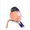 Süvöltő madár az ágon akvarell - A5 art print, Képzőművészet, Illusztráció, Festmény, Akvarell, Süvöltő madár az ágon akvarell - A5 art print (akvarell festményem alapján)  Méret: 14,8 x21 cm (A5)..., Meska