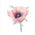 Pipacs virágos akvarell - A5 art print , Képzőművészet, Illusztráció, Festmény, Akvarell, Pipacs virágos akvarell - A5 art print (akvarell festményem alapján)  Méret: 14,8 x21 cm (A5)  Széps..., Meska