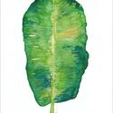 Zöld pálmalevél akvarell - A5 art print, Képzőművészet, Illusztráció, Festmény, Akvarell, Zöld pálmalevél akvarell - A5 art print (akvarell festményem alapján)  Méret: 14,8 x21 cm (A5)  Szép..., Meska