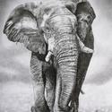 Elefánt- grafit rajz nyomat, Művészet, Művészi nyomat, Fotó, grafika, rajz, illusztráció, Eredeti grafit rajzom alapján készült nyomat. Rajzaim képek alapján készítem. Következő méretekben ..., Meska