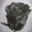 Rózsa - grafit rajz nyomat, Művészet, Művészi nyomat, Fotó, grafika, rajz, illusztráció, Eredeti grafit rajzom alapján készült nyomat. Rajzaim képek alapján készítem. A következő méretben ..., Meska