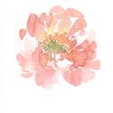 Peónia akvarell - art print (akvarell festményem alapján), Képzőművészet, Illusztráció, Festmény, Akvarell, Festészet, Fotó, grafika, rajz, illusztráció, Peónia akvarell - art print (akvarell festményem alapján)  Méret: 21 x 29,7 cm (A4)  Rózsaszín peón..., Meska