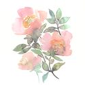 """Rózsaszín rózsák / Akvarell virágok / art print A4 es méretben, Képzőművészet, Otthon, lakberendezés, Falikép, Rózsaszín rózsák / Akvarell virágok / art print A4 es méretben (akvarell festményem alapján)  """"Rózsa..., Meska"""