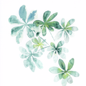 Schefflera levelek - art print (akvarell festményem alapján), Képzőművészet, Illusztráció, Festmény, Akvarell, Schefflera levelek - art print (akvarell festményem alapján)  Méret: 21 x 29,7 cm (A4)  Szépséges zö..., Meska