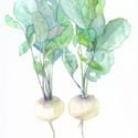 Fehér retek pár - art print (akvarell festményem alapján), Képzőművészet, Illusztráció, Festmény, Akvarell, Fehér retek pár - art print (akvarell festményem alapján)  Méret: 21 x 29,7 cm (A4)  Tavaszi fehér r..., Meska