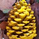 """Óriás tobozgyújtós """"banán"""" illattal, Esküvő, Dekoráció, Karácsonyi, adventi apróságok, Ünnepi dekoráció, 10-15 cm-es tobozokból készült tobozgyújtós sárga viaszba merítve isteni """"banán"""" illattal. Dekoració..., Meska"""