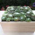 Kövirózsás doboz, Dekoráció, Otthon, lakberendezés, Asztaldísz, Virágkötés, Lakásunk kedves dísze lehet, egy élő növényekkel díszített doboz. A kiválasztásnál szempont volt, h..., Meska