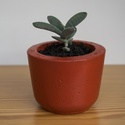 Migoo, Dekoráció, Otthon, lakberendezés, Dísz, Asztaldísz, Mindenmás, Egyedi, kézzel készült festett kaspó pozsgás növények számára. (a képen látható növényt ajándékba a..., Meska