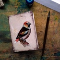 Meggyvágó - festményeim képeslapon, borítékkal, Akvarell madártanulmányaim most már képeslap f...