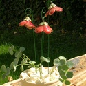 """Csengő-bongó  virágok, Dekoráció, Otthon, lakberendezés, Dísz, .Fehérre égő agyagból készítettem ezeket a  virágokat.   .A teljes virágfej átmérője4-4,5 cm,"""" magas..., Meska"""