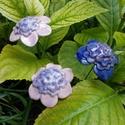Lila virágok, Dekoráció, Otthon, lakberendezés, Dísz, Fehérre égő agyagból készítettem ezeket a virágokat.  Mázazott,kétszer égetett kerámiák. A  virágok ..., Meska