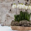 Beszúrós hóvirág, Dekoráció, Otthon, lakberendezés, Te is szereted a hóvirágok apró, fehér virágainak látványát, amikor kibújnak a hótakaró alól? Fahóvi..., Meska