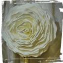 Papír virág.Esküvői nagy papír rózsa dekoráció, Dekoráció, Esküvő, Ünnepi dekoráció, Esküvői dekoráció,  Papír virág.Egyedi és különleges lehet bármilyen ünnepi dekoráció ezekkel a papír virágo..., Meska